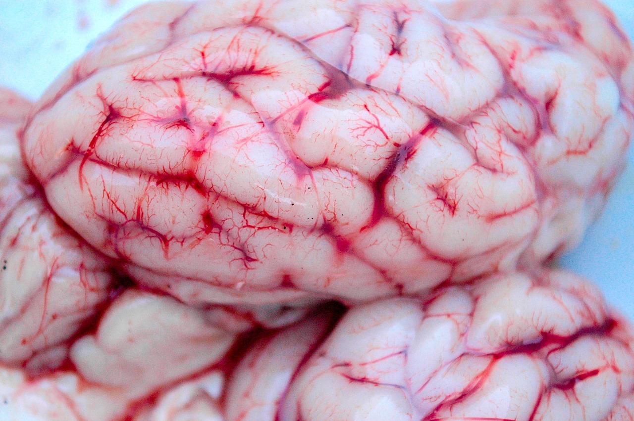 Hirnparasiten - die unbekannte Gefahr